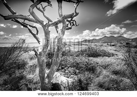 Black and white photo of a dead bark-less tree on a windswept island
