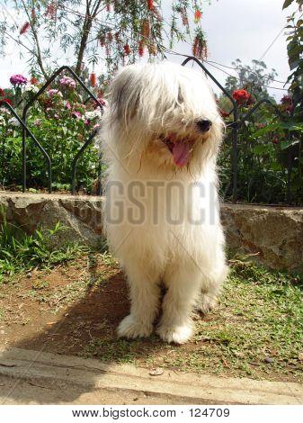 Baguio Dog 2