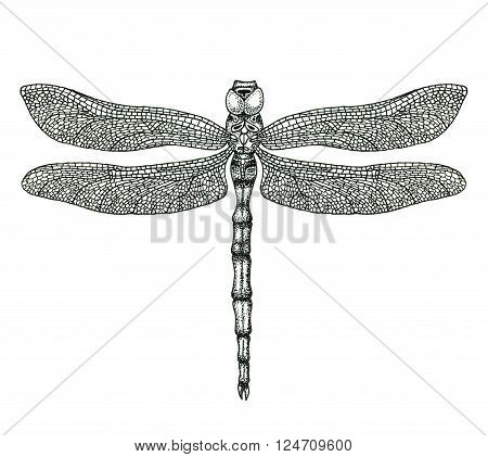 Hand-drawn dragonfly isolated on white. Hand-drawn illustration