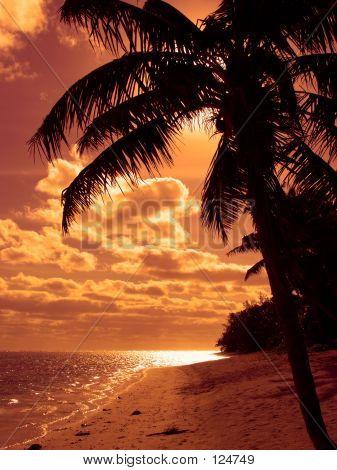 Bright Orange Palm