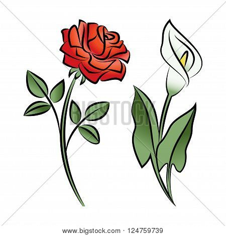 Set of two outlined flowers. Calla and rose In sketch hand drawn style. Vector illustration