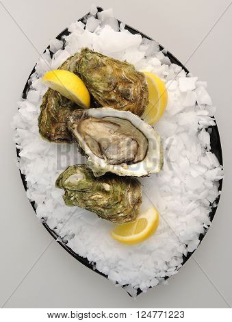 single plate with oysters, lemon and ice
