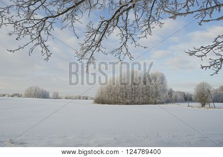 beautiful midwinter morning rural landscape in farmland