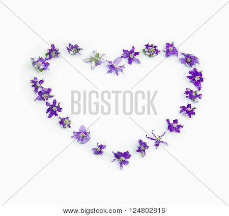 Heart of whithered spring flowers hepaticas on a white background. Concept of love. Withered spring love