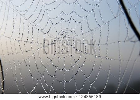 The Spider Web Closeup