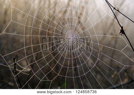 The Spider Web Closeup
