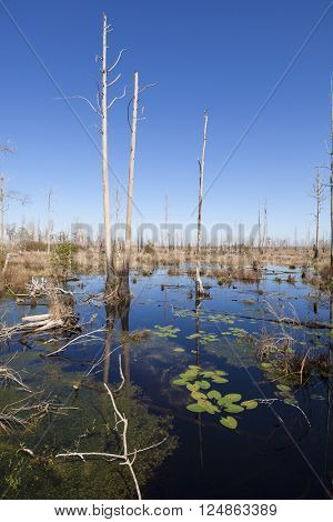 Headwaters of the Suwanee River in the Okefenokee swamp