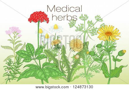 Template label poster page spread design texts about alternative medicine. Vector illustration of flowers and medical herbs. Ginseng chamomile dandelion arnica yarrow rosemary caraway.