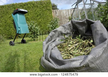 Garden shredder and wood chippings from pruned shrub waste for composting or use as mulch.