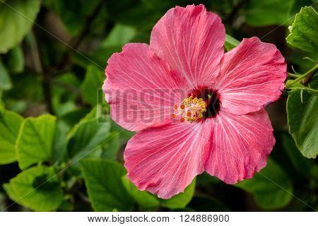 Beautiful Hawaiian Tropical Flower soaking in the warm Hawaiian sun