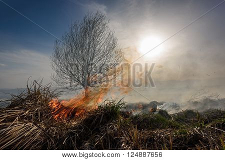 Cleaning the fields of the dry grass at sunset. Burning grass.