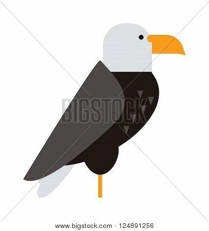 Eagle bird, brown hawk and flying eagle, wild hawk. Freedom national american symbol eagle falcon bird. North American bald eagle raptor wildlife bird and hawk predator animal cartoon vector.