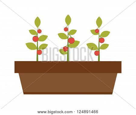 Young pepper seedling and young green plant. Nature spring seedling new plant life. Grow earth sprout gardening plant seedling. Young green plant seedling growing in a soil flat vector.