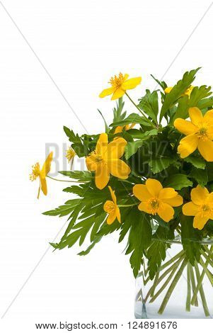 yellow buttercups in glass isolated in white