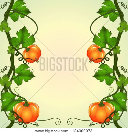 Autumn background. Vine pumpkins with space for text. Vector illustration.