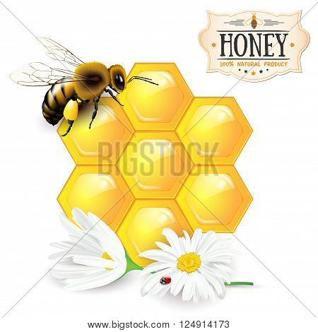 Bee honeycomb daisies and honey label - isolated on white background. Vector illustration.