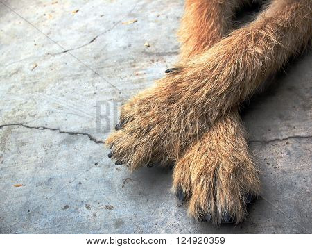 dog foot on floor dog foot feelling happy