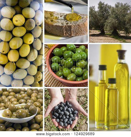 Olive harvest collage made of seven images. Freshly harvested olives olive oil on olive wood