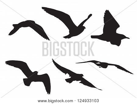 Seagull Set Silhouettes on the white background