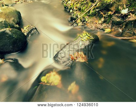 Gravel In Water Of Mountain River Covered By Colorful Aspen And Beech Leaves. Fresh Green Leaves