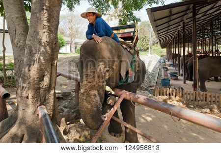 LAMPANG, THAILAND - FEB 19: Elephant and mahout have fun in village for animals in Thai Elephant Conservation Center on February 19, 2016. The Center - TECC founded in 1993 under Royal Patronage