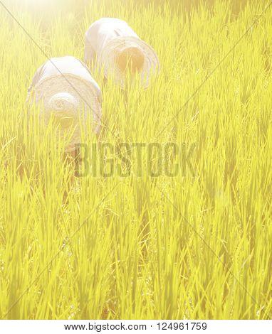 Farmer Field Planting Rice Concept