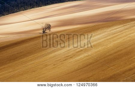Early spring landscape with tree, field and forest. Agriculture