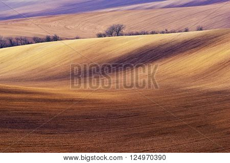 Spring landscape with fields and trees. Agriculture