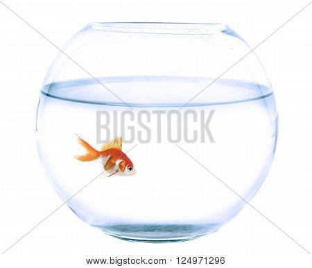 empty fishbowl and goldfish in front of white background