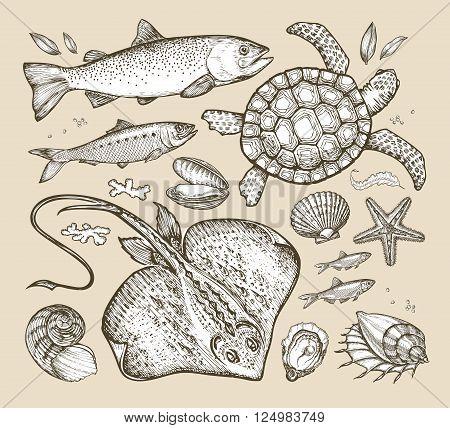 marine mammals. hand drawn sketches. vector illustration