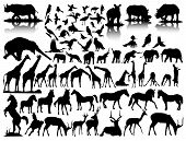 vector silhouettes of wildlife on a white background poster