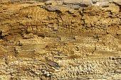Driftwood detail sand point beach England uk poster