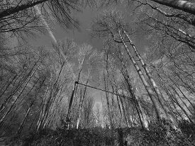 Winter Trees in black and white wide angle