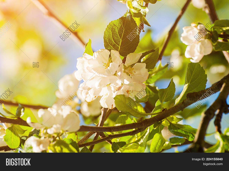 Spring Landscape Image Photo Free Trial Bigstock