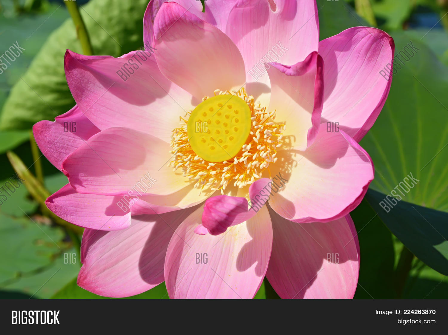 This Flower Admire Image Photo Free Trial Bigstock