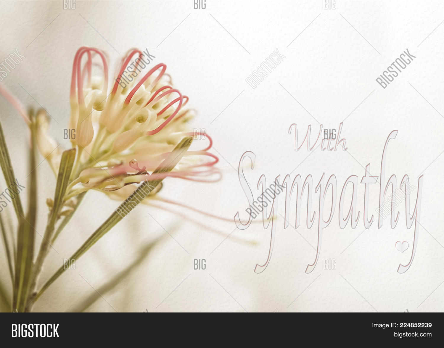 Sympathy card australian grevillea image photo bigstock sympathy card with australian grevillea flower in soft pastel colors and text for sorrow funeral kristyandbryce Images