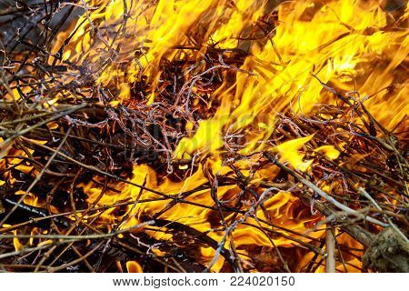 Languages of open fire in the spring forest, the grass is burning fire dry grass burning branches forest burns