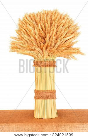 sheaf of ripe wheat standing on a table close-up on a white background