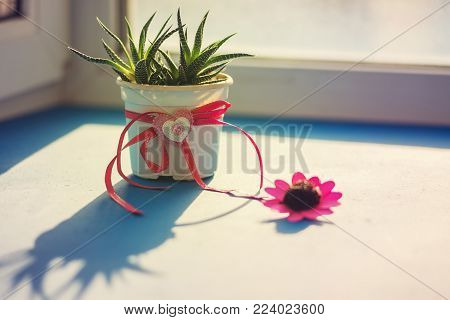 Valentine's Day, the day begins with a good mood - cactus with a heart symbol stands on a blue surface in rays of sun, next to a red flower on the window blurred background.
