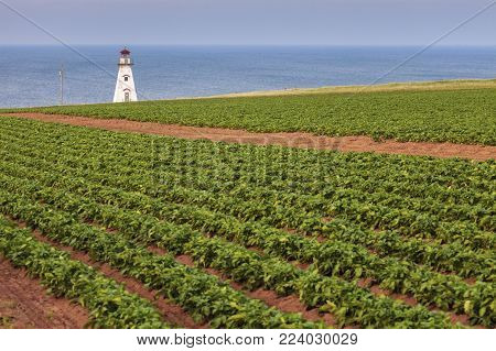 Cape Tryon Lighthouse On Prince Edward Island. Prince Edward Island, Canada.