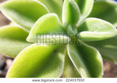 Beautiful Succulent Plant Close Up With Vibrant Light On Petals High Quality Stock Photo