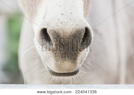 Horse's nose farm outdoors cute countryside funny