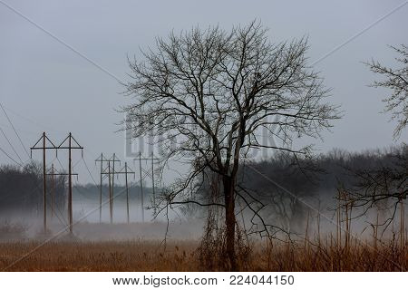 foggy landscape in the greenwood, hornbeam trees, rainy autumn wether, gloomy mood autumn mist fog rainy day