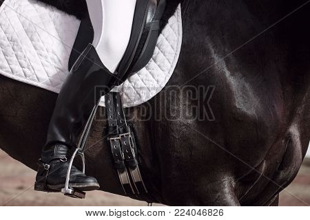 The jockey sits in the saddle on a horse shooting close-up. Leg in treko, crooks and boots is in the stirrup. A pedigree horse for equestrian sport.