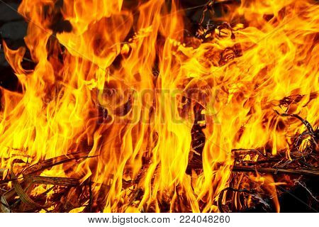 Macro shot of bonfire, white smoke, hot, glowing coal and fire. Burning branches and wood. fire burns grass and branches
