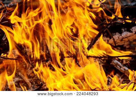fire burns grass and branches Large fire burning olive branches after pruning