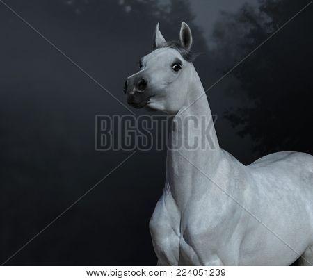Graceful statuary Arabian stallion in twilight forest. Low contrast monotone.