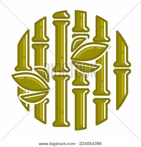 Bamboo pattern or poster background. Vector tropical palm or bamboo sprouts with green leaf for Zen or Asian relax design