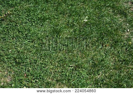 Green grass background texture for disign and decoration