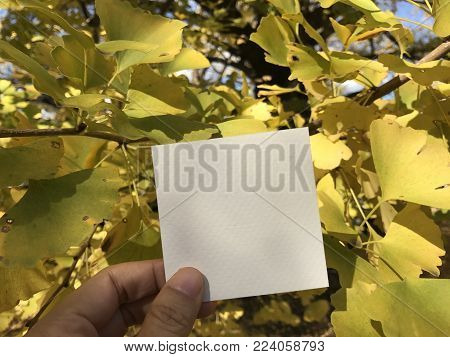 man holds a square empty white paper with beautiful yellow ginkgo leaves and nice blue sky on background, using for background for sending message to someone